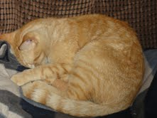 Cat SYLE